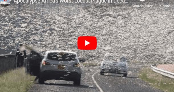 NOVA ONDA DE GAFANHOTOS ATINGE A ÁFRICA, DESTA VEZ 20 VEZES MAIOR (VÍDEO)